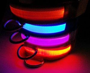 leuchthalsband-hund-led-halsband