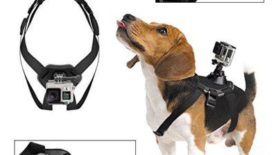 Gopro Hero Hund Hundehalterung